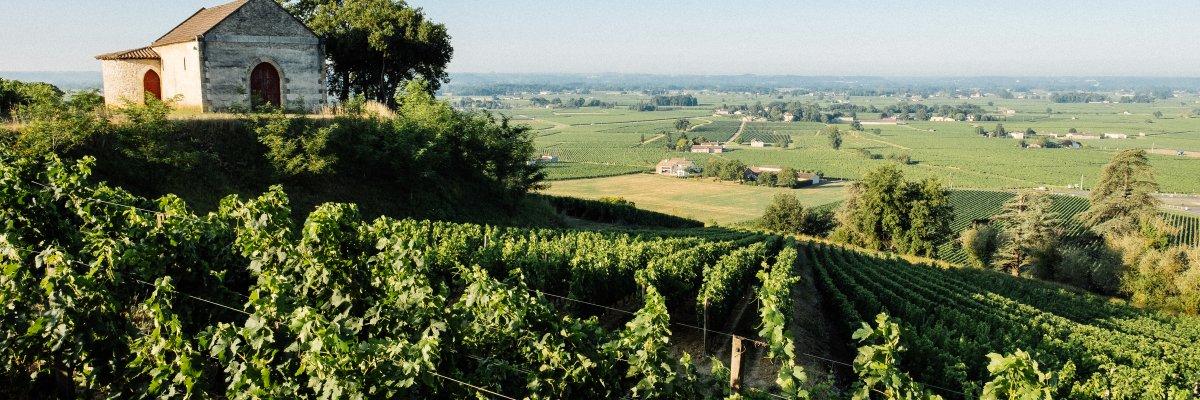 appellation Saint-Emilion vin rouge