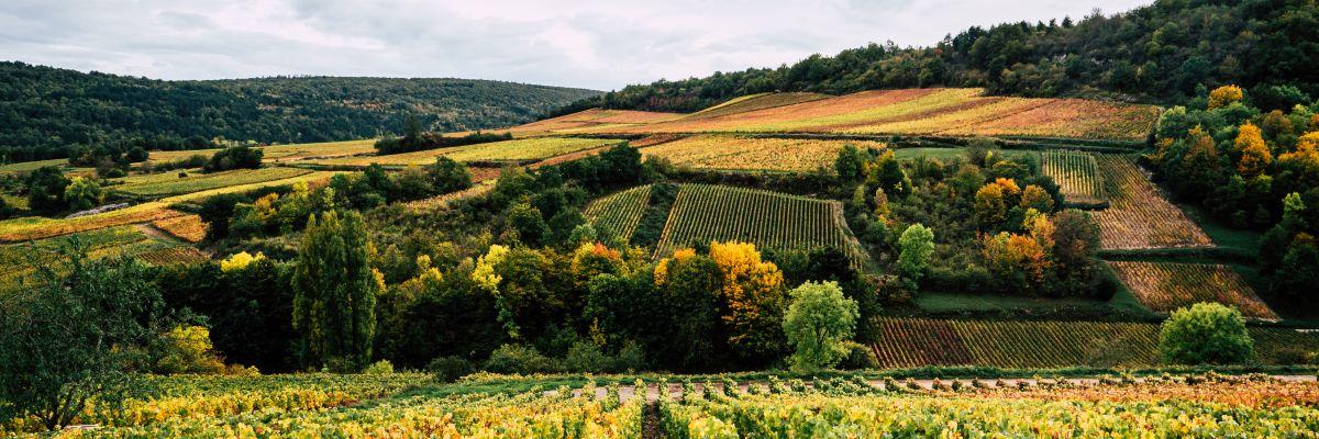 Tout savoir sur les appellations viticoles