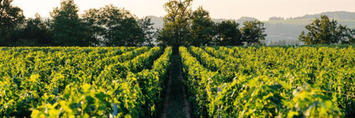 parrainer-vigne-alternative-achat-vignoble